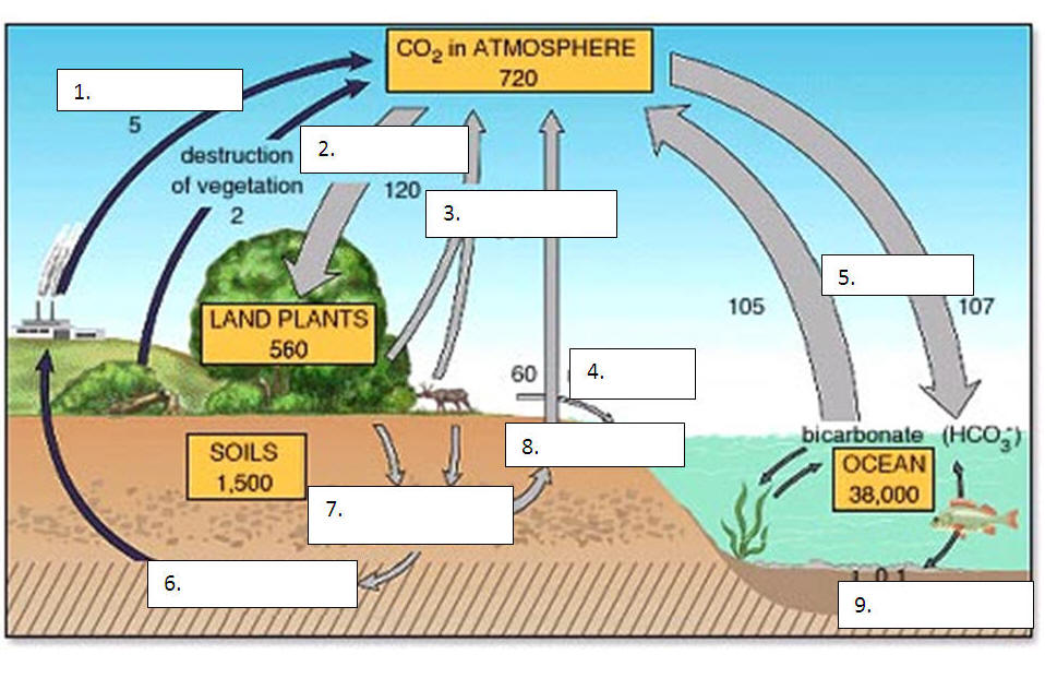 Carbon Cycle Diagram Worksheet - humorholics